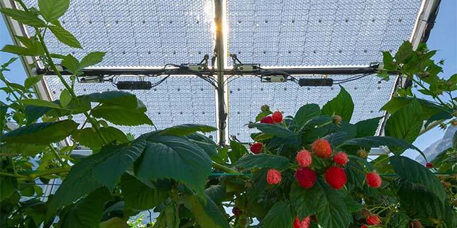 Тестват прозрачни соларни панели за агриволтаични приложения