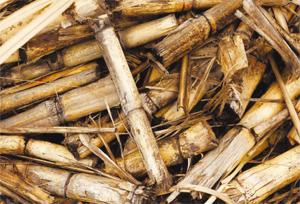 Производство на енергия от сухи горски и селскостопански отпадъци