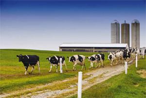 Производство на енергия от животински субстрати