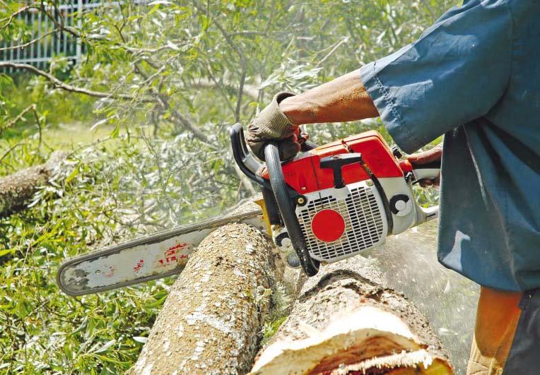 Биогорива на дървесна основа